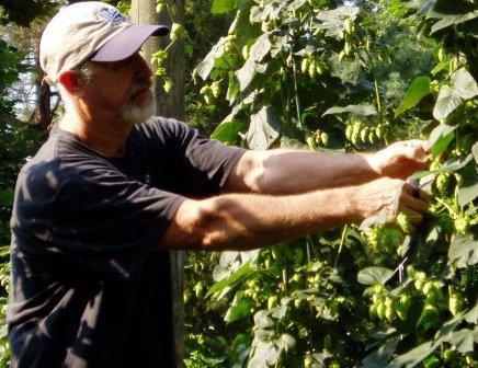 Stan Driver picking hops