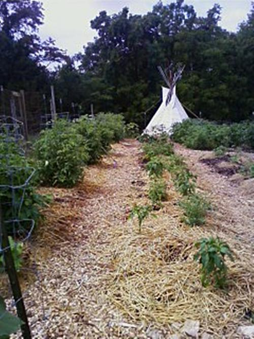 Our Community Farm teepee.