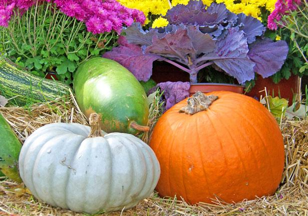 "<a href=""http://www.publicdomainpictures.net/view-image.php?image=13412&picture=gourds-and-pumpkin"">Gourds And Pumpkin</a> by David Wagner"