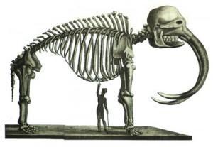 mastodon, skeleton 1816