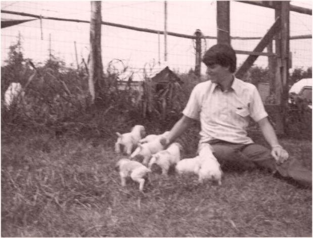A Young Bill Fawcett with a litter of Brittney Pups