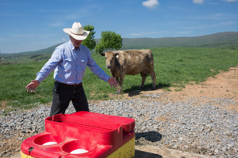 Whitescarver at one of his watering troughs on his farm in Swoope. A cow stands watch.