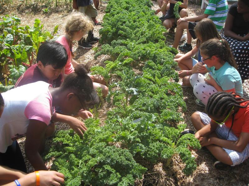 Children at the City Schoolyard Garden tend to the season's crop of kale.