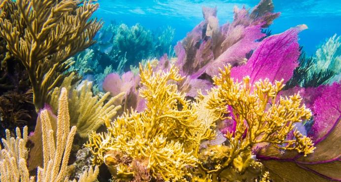The Caribbean has lost 80 percent of its coral reefs in the last 50 years, according to Dr. Craig Downs, lead author of a new study showing how oxybenzone destroys coral. The study was published in October.