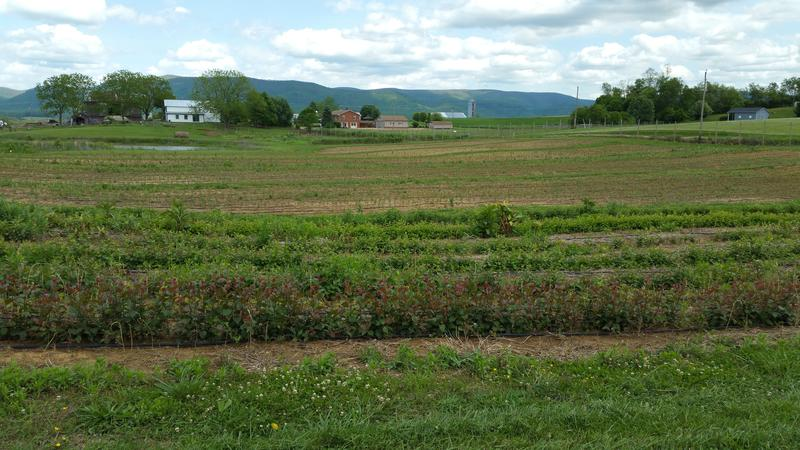 Looking across the fields at the Crimora Farm