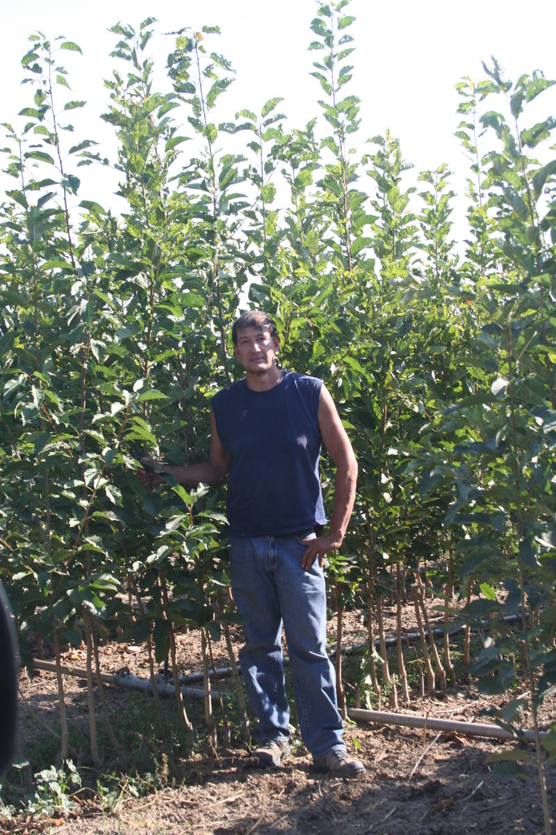 Raul in the nursery with trees ready for sale