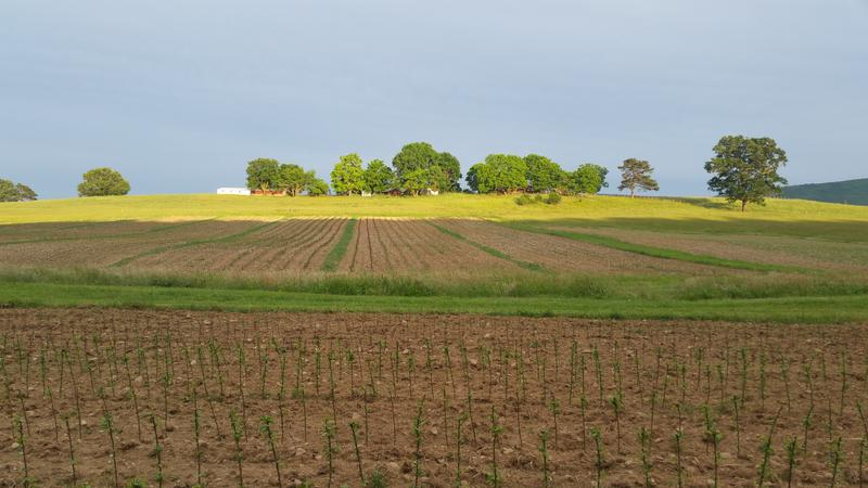 A view of the fields at the new nursery right after the rootstocks have been planted