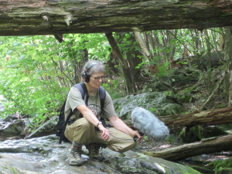 Shenandoah National Park's artist-in-resident Dianne Ballon gathers sounds from the Dark Hollow Falls cascades.