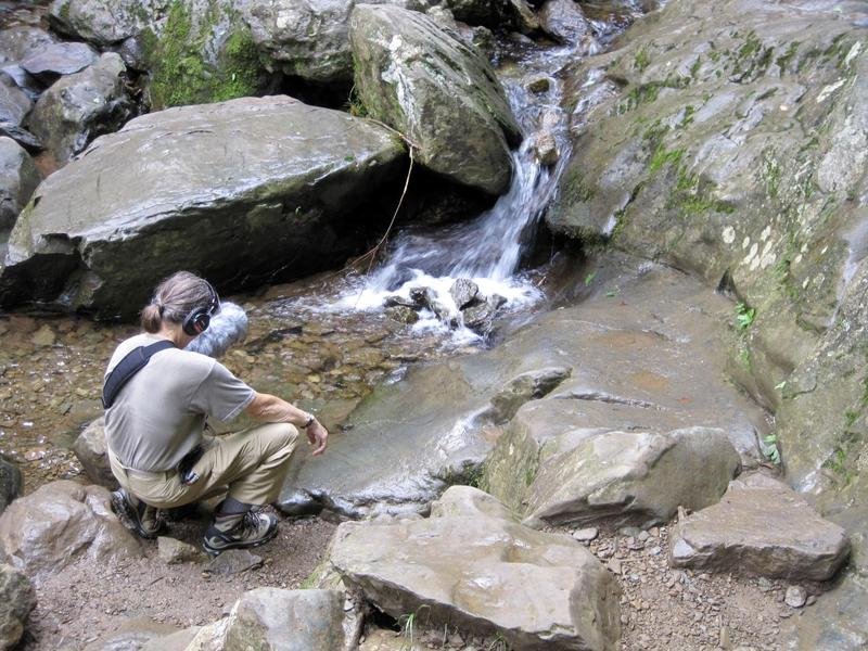 Dianne Ballon listens to the sounds of the Hogcamp Branch along the Dark Hollow Falls as she collects material for her sound installation, which will be released at the Shenandoah National Park's Byrd Visitor Center in six months.
