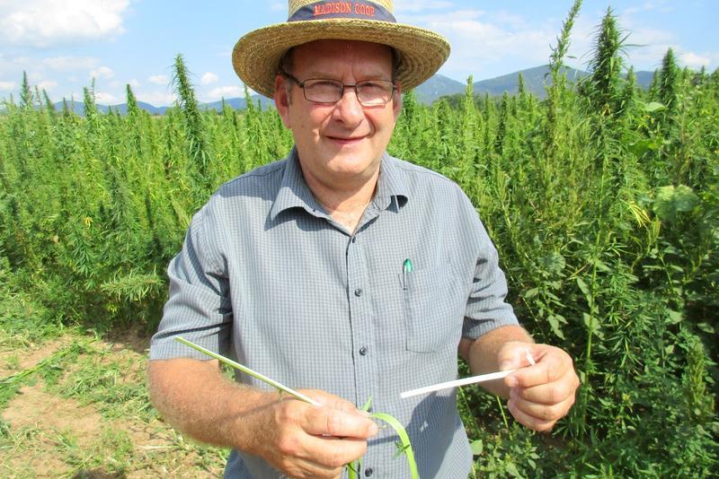 Farmer Glenn Rodes provides farming expertise for Renfroe's research.