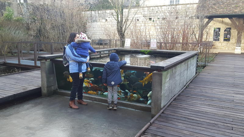 The site also provides an open fish tank; visitors are even encouraged to touch the fish inside.