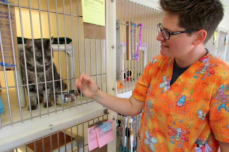 Jo Benjamin is Adoption/Rescue Coordinator for the Rockingham-Harrisonburg SPCA.