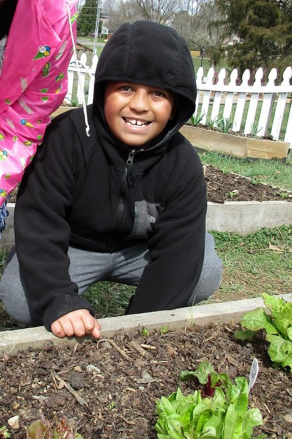 Jayden poses with a red beet plant transplanted beside some lettuce plants in a raised bed in the Waterman garden.