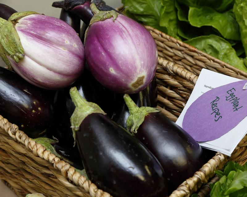 Eggplants, with recipes, from the Allegheny Mountain Institute (AMI) one-acre farm.