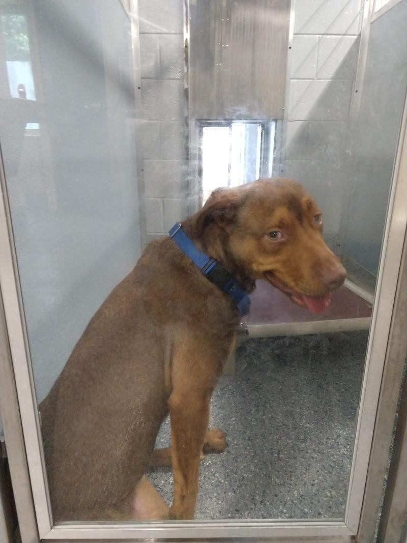 """Boone is one of the rescued dogs from North Carolina. Angie Gunter says """"they are all requiring vaccinations, micro-chips, and the majority have to be spayed or neutered."""" Some of them will require some more medical attention."""