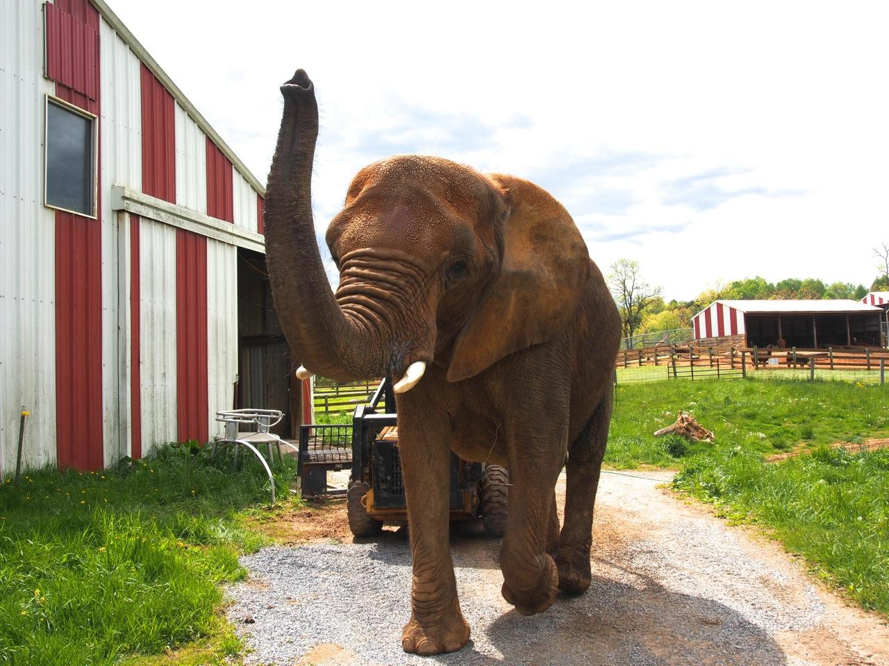 Closing A Zoo Infractions Large And Small Wmra And Wemc