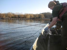 Working the gill nets to catch sturgeon in the Kalamazoo River