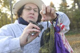 Volunteer Margaret Hahn uses proper technique to rescue a bird from a capture net