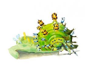 Cecropia caterpillar by Paul Krieger