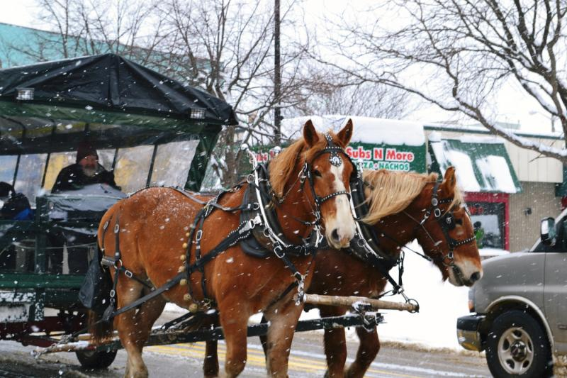 Horse-drawn carriage rides, a film festival, chili cook-off, and more will be featured at the Ice Breaker Festival.