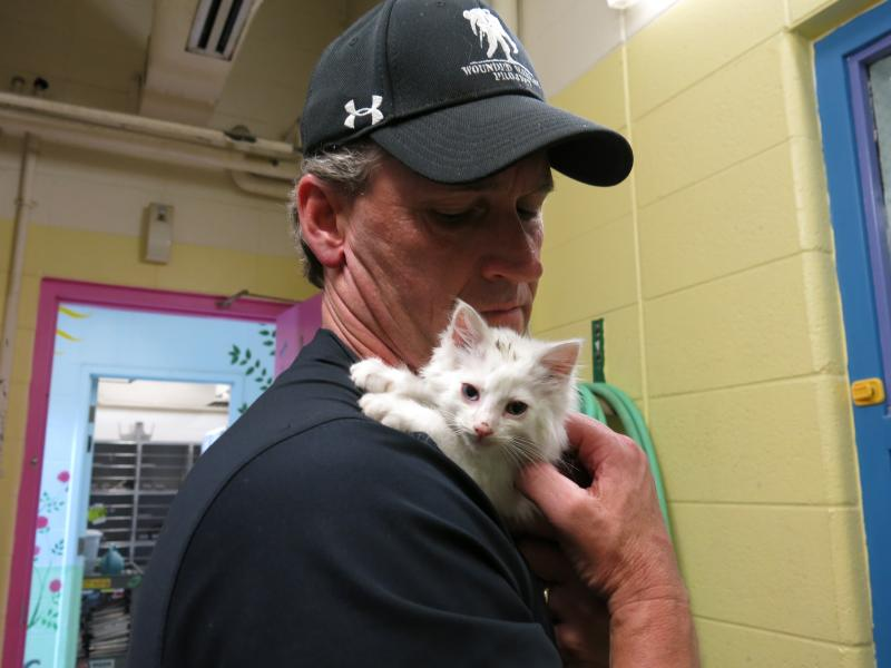 KCASE Director Steve Lawrence holds one of the shelter's kittens.