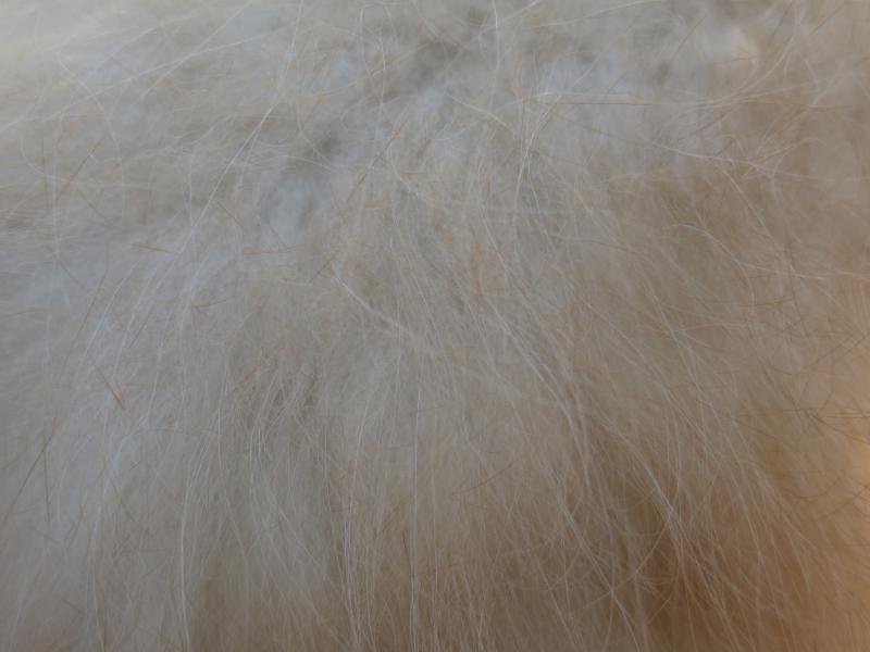 Angora fiber is prized for its warmth and softness.