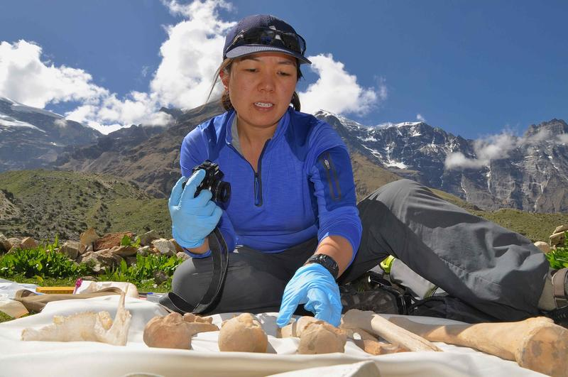 Dr. Jacqueline Eng analyzes bones of Kyang Cave, Nar-Phu Valley, Nepal.