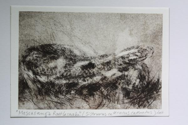 Doet Boersma's print of an Eastern Massasauga Rattlesnake