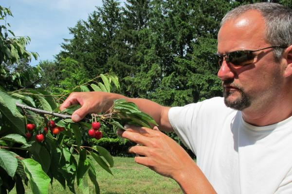 File photo of cherry farmer Patrick McGuire of Atwood. He says the immigration controversy has caused a labor shortage