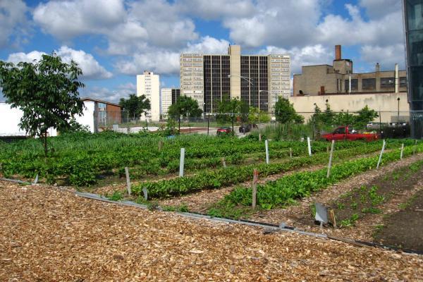 Urban garden in Chicago