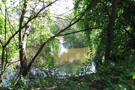 The banks of the Kalamazoo River.