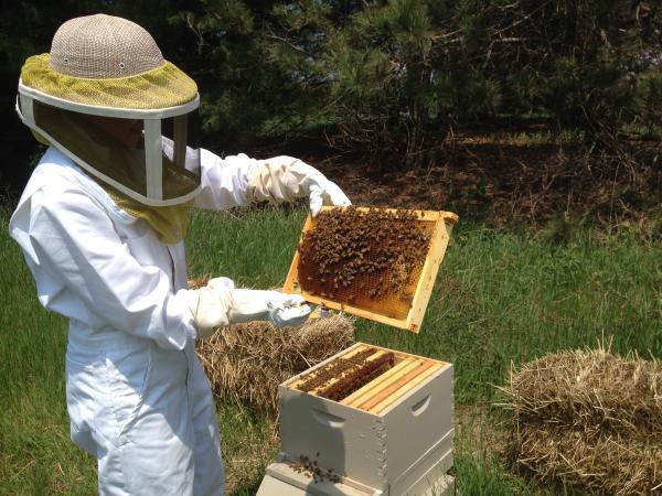 Ann Sharkey inspects her hive on WMUK correspondent Joan Donaldson's organic fruit farm