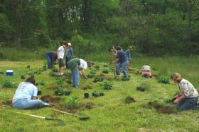 People planing plants