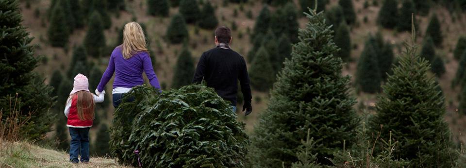 Nc Christmas Tree Association
