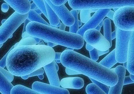 Traces of Legionnaires' Disease Bacteria Found in Batavia | WNIJ ...
