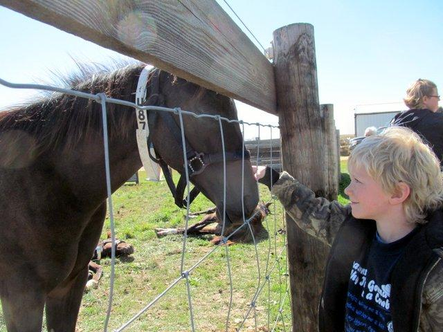 Gabe Deckard of Marshall, IL makes friends at Rita Crundwell's horse auction.