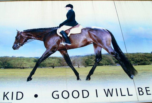 Painting of Rita Crundwell riding her star stallion, Good I Will Be. The horse known as Willie sold for $775,000 to a horse breeder in Canada. The painting is on the side of one of Crundwell's trailers.
