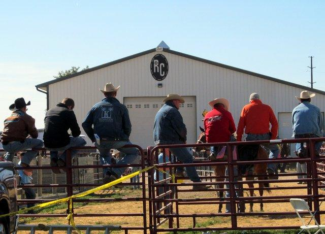 Horse handlers keep the horses flowing to the auction block.