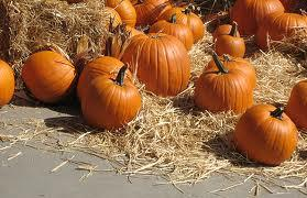Illinois is the nation's largest grower of pumpkins