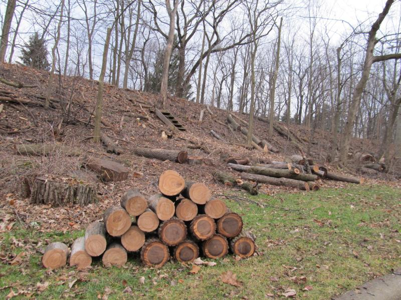 Wood piles up along the DeKalb Nature Trail as ComEd removes more than a mile-long swath of trees and brush from below their power lines.