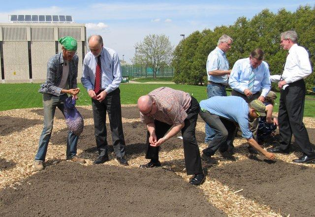 Planting onion starts at the International Garden