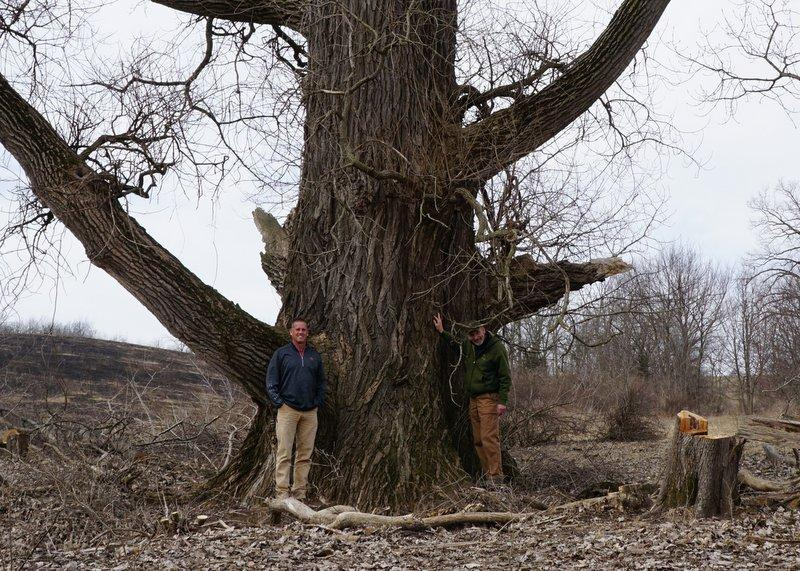 Todd Tucker and Mark Herman of the Byron Forest Preserve District and the new biggest tree in Illinois.