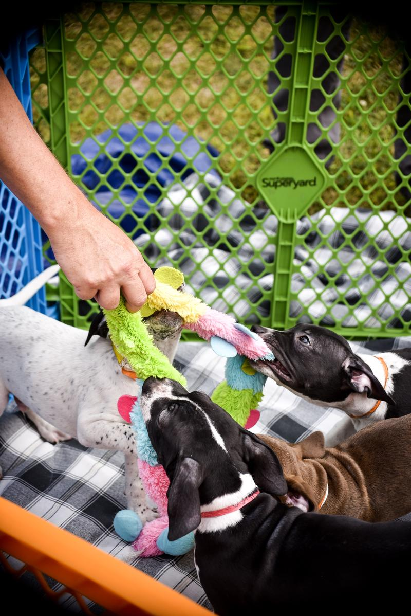 Tails in Sycamore offered puppy therapy for educators.