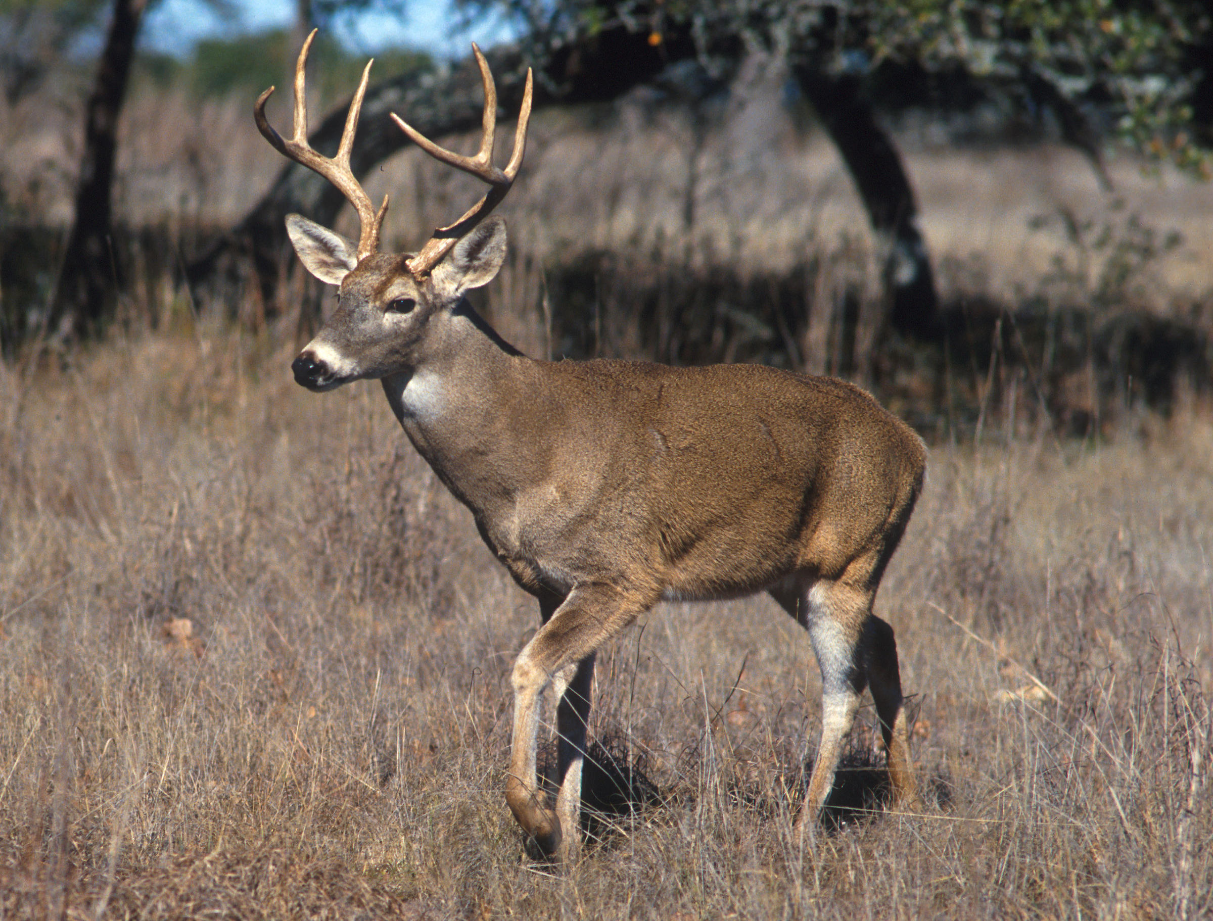 Hunters Need to Know about Infected Deer