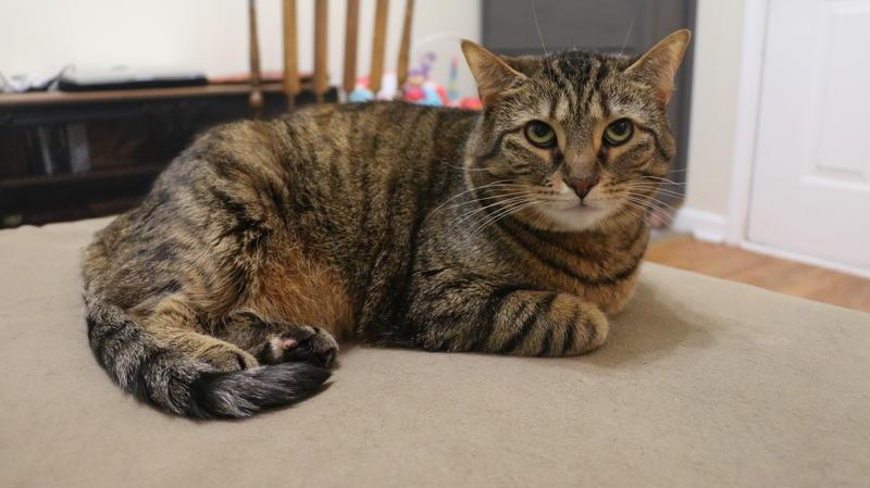 Emmy's cat.