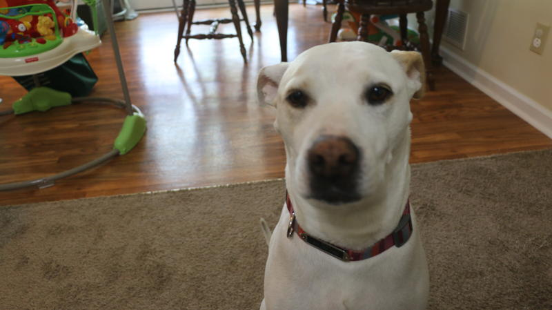 Boo. Emmy's dog.