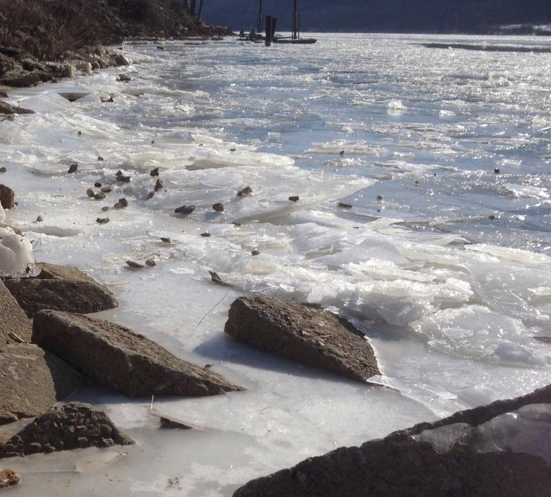 Chunks of ice at the shore of the Ohio River---brr!