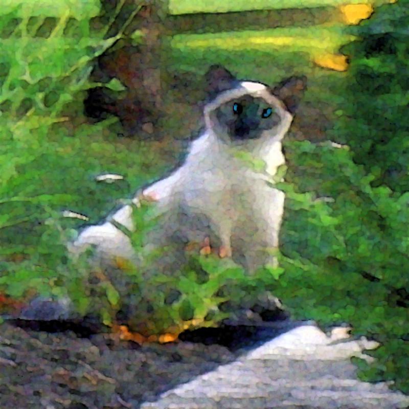 Dr. Steffen's cat Blu