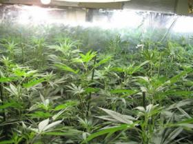 Example of a pot growing operation
