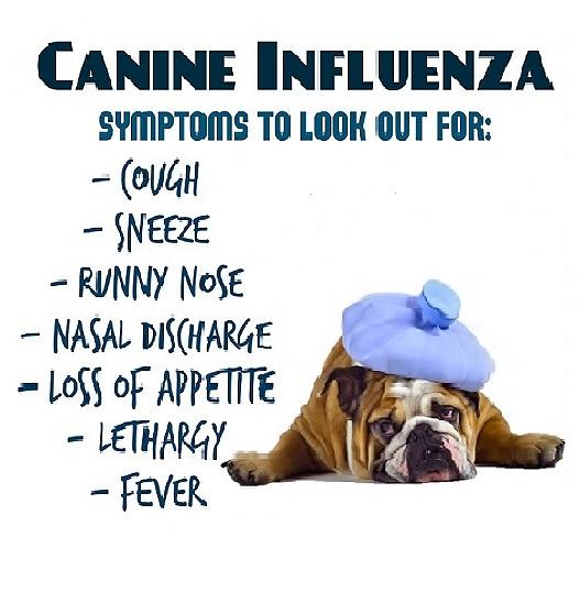 dog flu in michigan